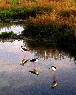 Poster featuring the digital art Black-necked Stilts by Timothy Bulone