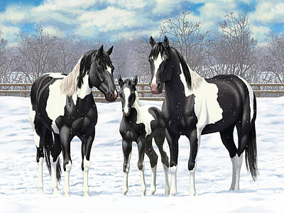 Black Paint Horses In Winter Pasture Poster by Crista Forest