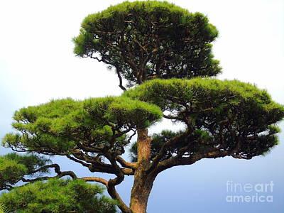 Black Pine Japan Poster by Susan Lafleur