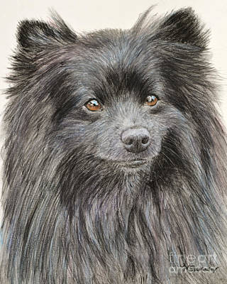 Black Pomeranian Painting Poster by Kate Sumners