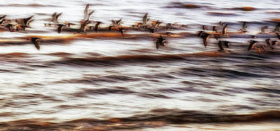 Poster featuring the photograph Black Skimmers Of Long Beach - Mississippi - Birds by Jason Politte
