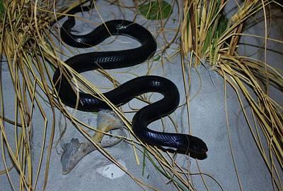 Black Snake Poster by Cynthia Guinn