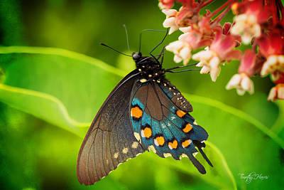 Black Swallowtail #1 Poster
