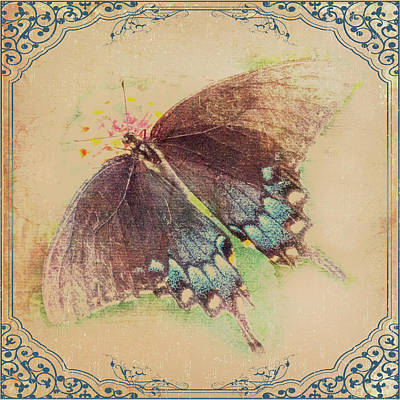 Black Swallowtail Butterfly Framed  Poster