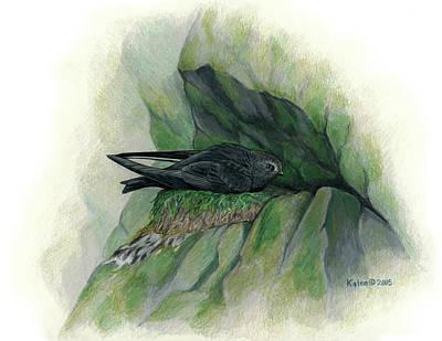 Black Swift On Nest Poster by Kalen Malueg