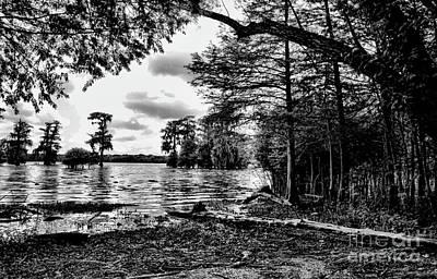 Black White Cypress Swamps La Poster