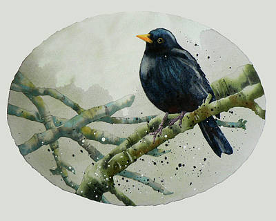 Blackbird Painting Poster by Alison Fennell