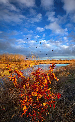 Blackbirds Singing Poster by Phil Koch