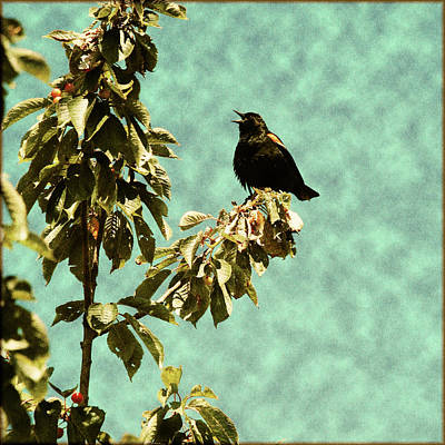 Blackbird's Song Poster by Bonnie Bruno