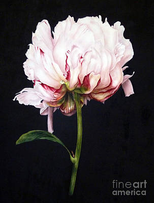 Peony On Black Poster by Marie Burke