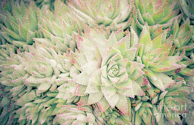 Poster featuring the photograph Blanket Of Succulents by Ana V Ramirez