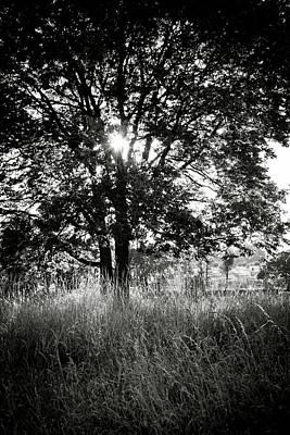 Blazing Tree Poster