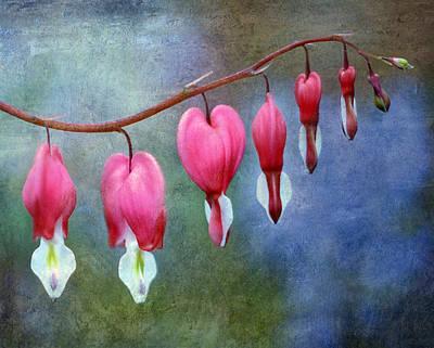 Bleeding Heart 2 Poster by Marilyn Hunt