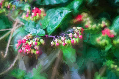 Bleeding Heart Flowers Clerodendrum Painted 2 Poster by Rich Franco