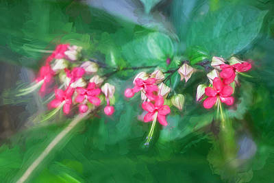 Bleeding Heart Flowers Clerodendrum Painted 5 Poster by Rich Franco