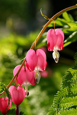 Bleeding Hearts With Fern Poster