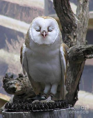 Blinking Owl Poster