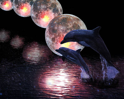 Dolphins In The Moonlight Poster