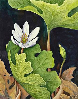 Bloodroot Poster by Margit Sampogna