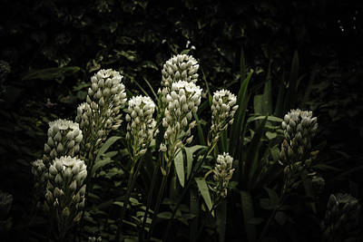 Poster featuring the photograph Blooming In The Shadows by Marco Oliveira