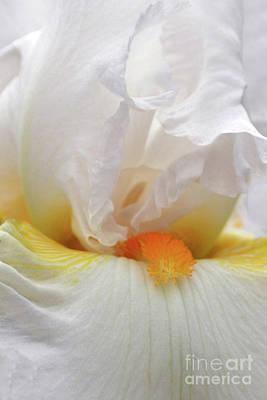 Blooming Iris Beauty Poster