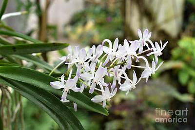 Blooming White Flower Spike Poster