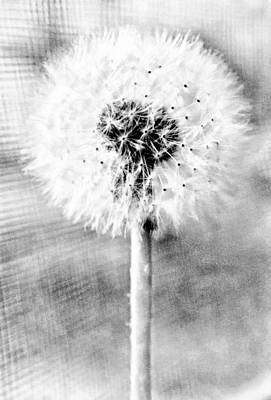 Blowing In The Wind Pencil Effect Poster