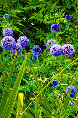 Blue Allium Flowers Poster