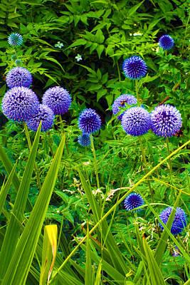 Blue Allium Flowers Poster by Judi Saunders