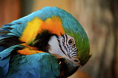 Blue And Gold Macaw Poster by Maria Angelica Maira