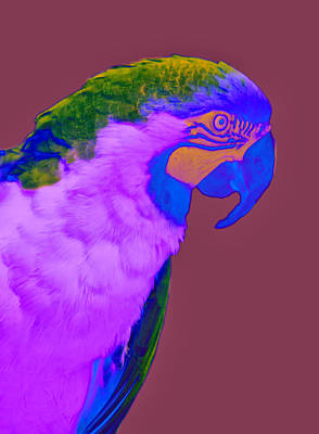 Poster featuring the photograph Blue And Gold Macaw Sabattier by Bill Barber