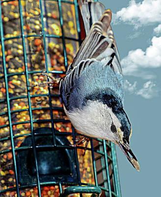 Blue Bird On Feeder Poster
