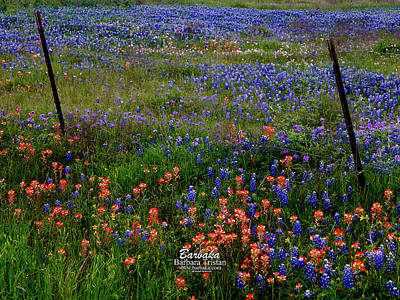 Poster featuring the photograph Bluebonnets #0487 by Barbara Tristan