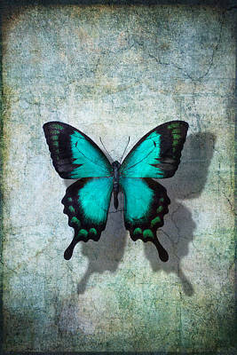 Blue Butterfly Resting Poster by Garry Gay