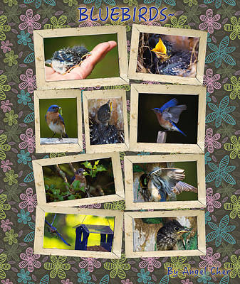 Poster featuring the photograph Blue Collage by Angel Cher
