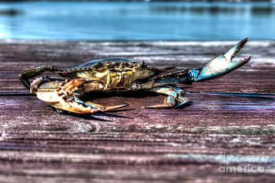 Blue Crab - Big Claws Poster
