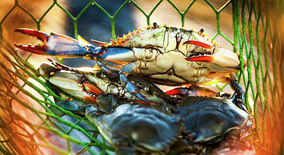 Blue Crab Cha Cha Cha Poster by Karen Wiles