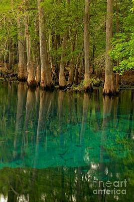 Blue Cypress Reflections Poster