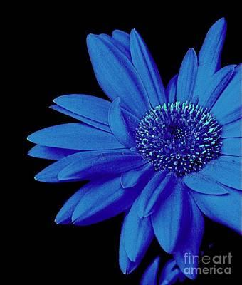 Blue Poster by Elfriede Fulda