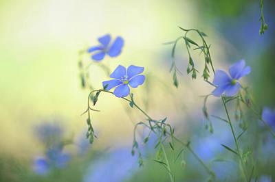 Blue Flex Flower Poster