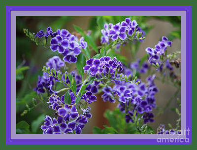 Blue Flowers With Colorful Border Poster by Carol Groenen