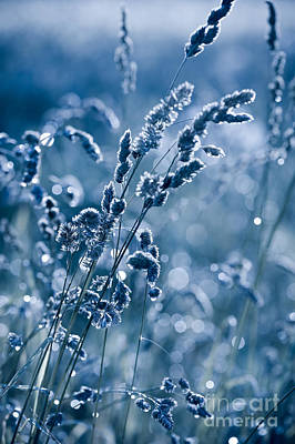 Blue Grass Shining In Bokeh Poster