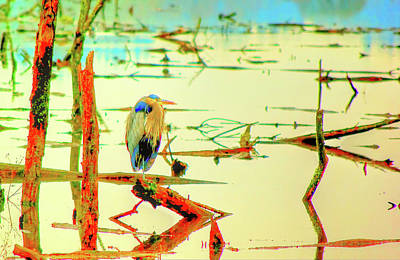 Poster featuring the photograph Blue Heron by Dale Stillman