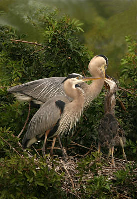 Poster featuring the photograph Blue Heron Family by Shari Jardina