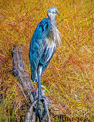 Poster featuring the photograph Blue Heron In Maryland by Nick Zelinsky
