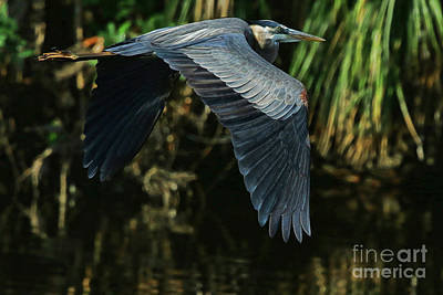 Poster featuring the photograph Blue Heron Series The Pond by Deborah Benoit