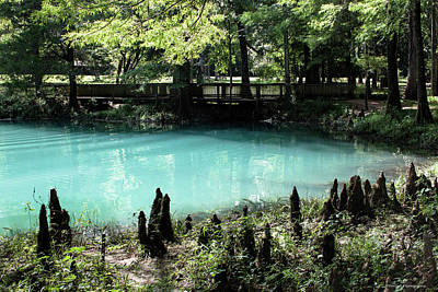 Blue Hole Spring Poster by Debra Forand