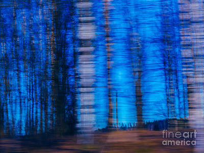 Blue Hour In Birch Forest Poster