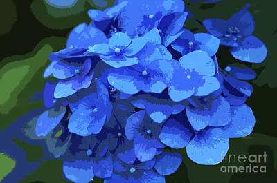 Blue Hydrangea Stylized Poster by Sharon Talson
