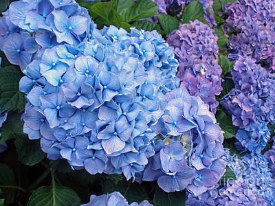 Blue Hydrangeas By Kaye Menner Poster by Kaye Menner